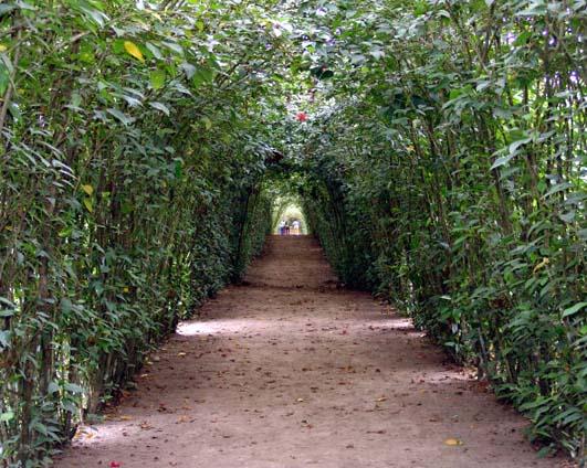 Gran caminata al jard n bot nico el club de los pies for Informacion sobre el jardin botanico
