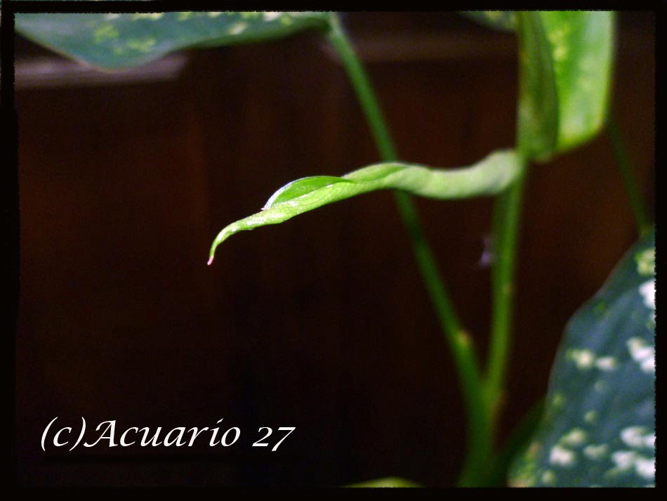 Crecimiento.- Foto: Acuario27