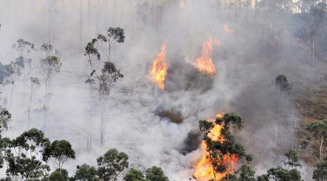 Guayabillas en llamas