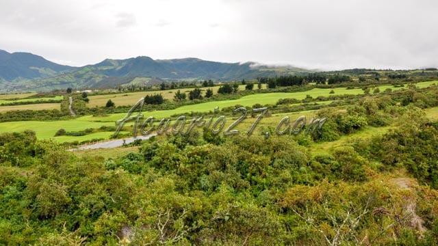 Verde, Sector de la Laguna de Cuicocha, Foto Acuario27