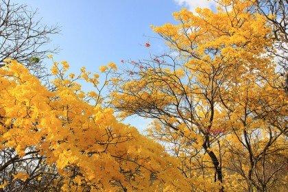 Florecimiento de los Guayacanes. Foto: Min Turismo