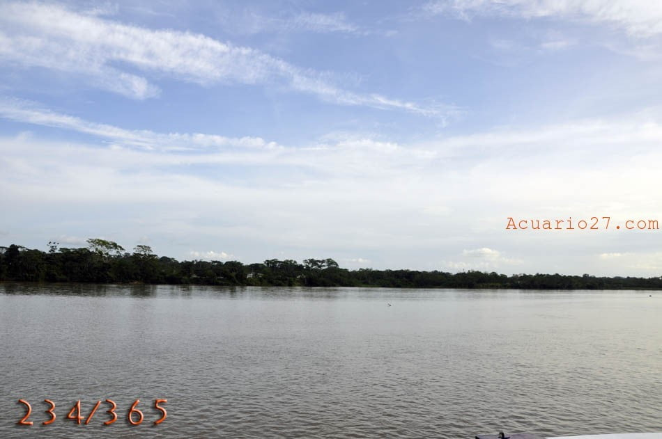 234/365 Río Napo