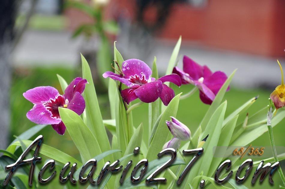 Flores en Primer Plano