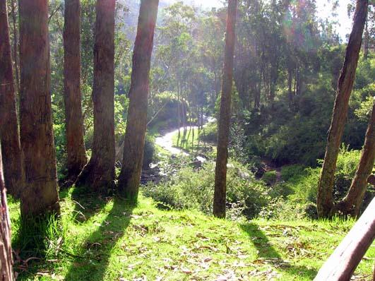 Bosque cascada de Peguche