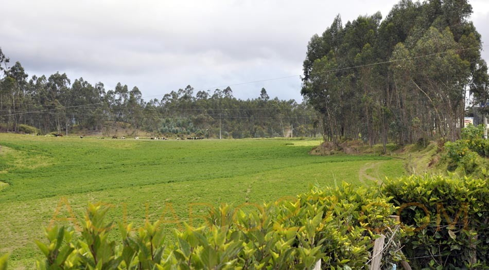 Verde.- Cotacachi Agosto 2011. Acuario27
