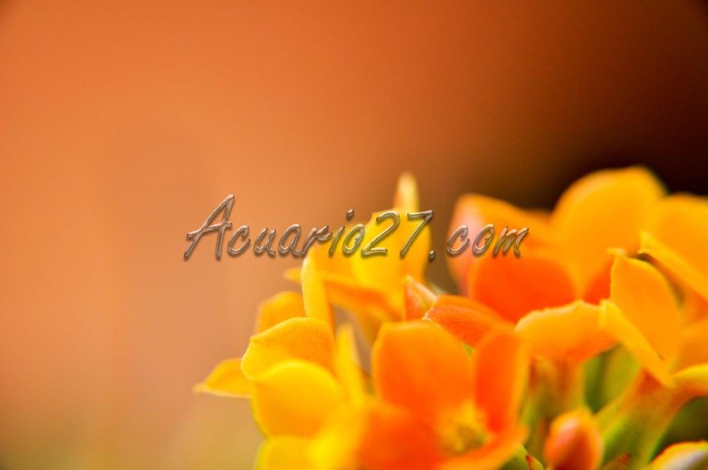 Macro, Flores Pequeñas.