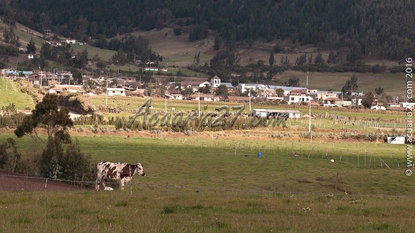 En la ruta Zuleta Cayambe