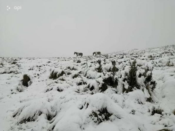 Sorprendentes imagenes reportan la nevadas y el Fr?o en la Sierra Central del Ecuador.