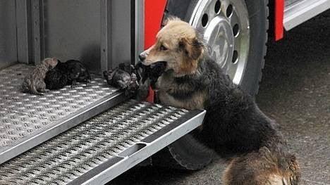 Se llama Amanda y rescató uno a uno a los perritos durante un incendio y los colocó en una autobomba.